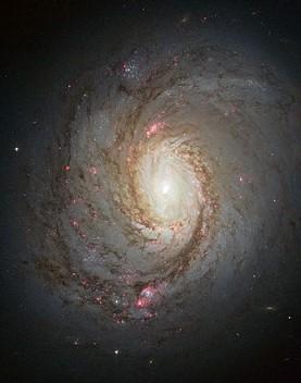 440px-Messier_77_spiral_galaxy_by_HST.jp